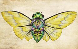 Cicada Dream Print