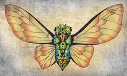 Cicada Dream Orangenet.jpg