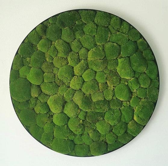 Circle of Pole Moss