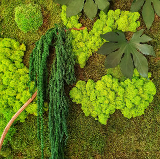 Moss Wall Inspiration 2