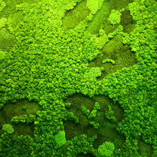 Moss Wall Inspiration 25