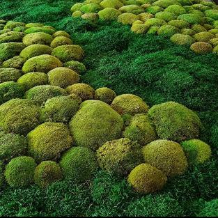Moss Wall Inspiration 24