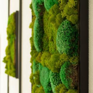 Moss Frame Inspiration 21