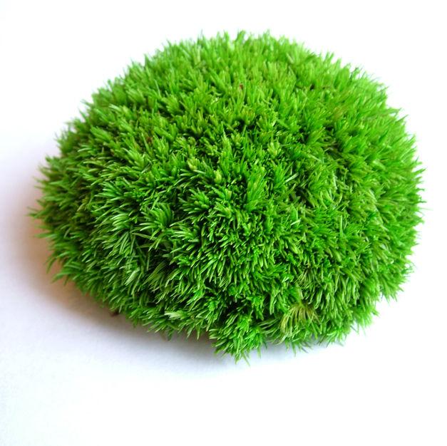 Polar Moss Green