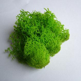 Reindeer Moss Spring Green