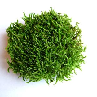 Flat Moss Green