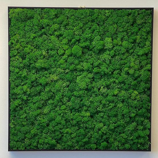 Square Reindeer Moss Frame
