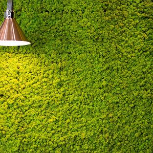 Moss Wall Inspiration 4