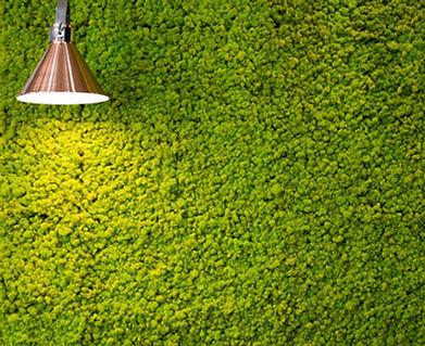 Biophilic Reindeer Moss Wall by Moss Lif
