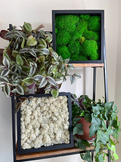 Combo Reindeer and Pole Moss Frames