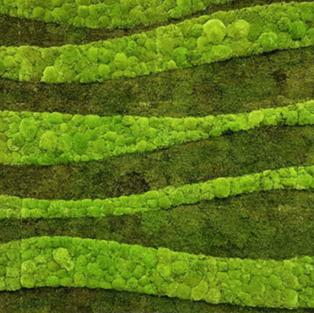 Moss Wall Inspiration 5