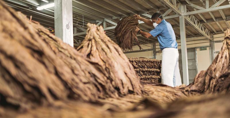 fermeting tobacco in pilones