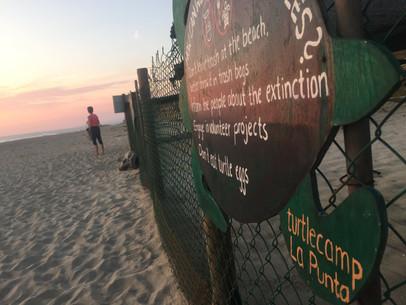 Sunset Turtle release- turtlecamp La Punta