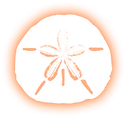 Sand Dollar1.png