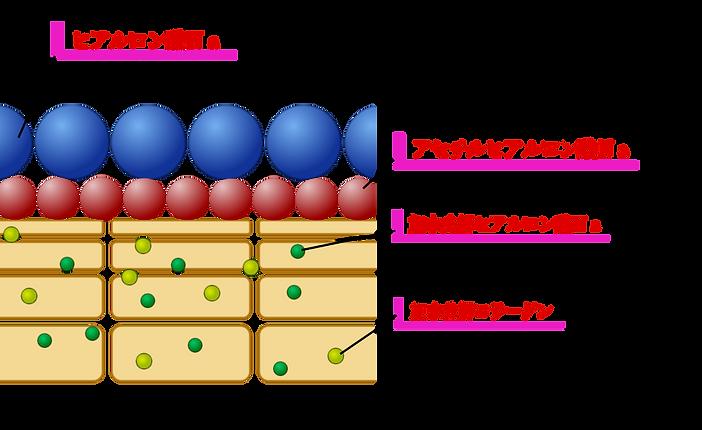 ヒアルロン酸 アセチル 加水分解 コラーゲン