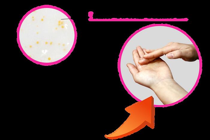 アルギン酸カプセルの説明
