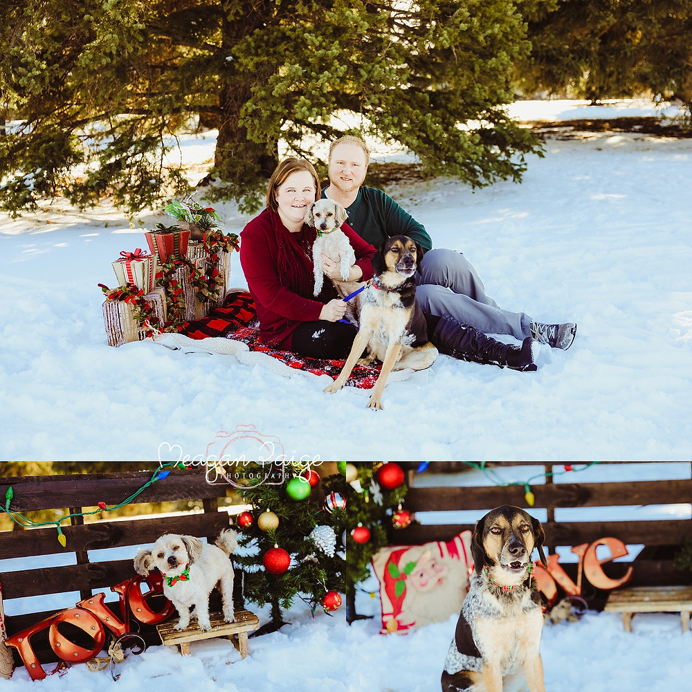 Family with their Pets, Mini Photo Sessions In Confederation Park
