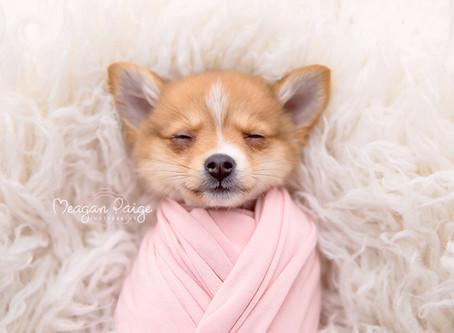 This Newborn Puppy Photo Shoot will MAKE YOUR DAY!!