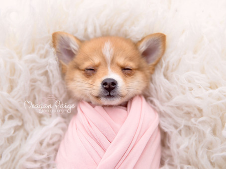 This Newborn Puppy Photo Shoot will MAKE YOUR DAY!!
