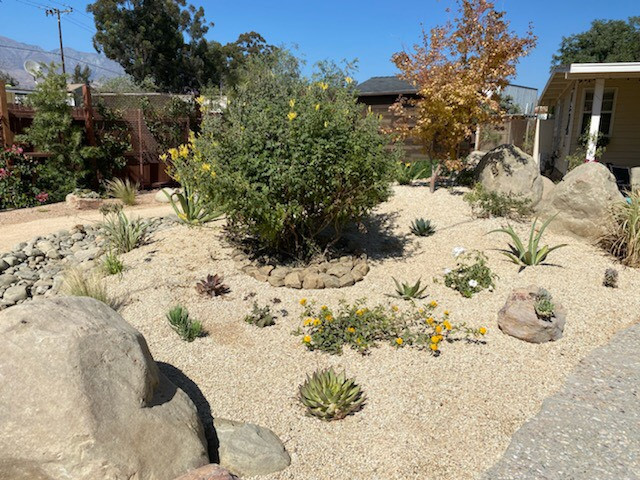 Mojave Gold Top Dressing