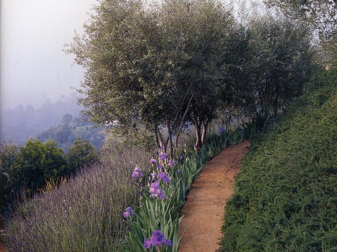 DG walking path