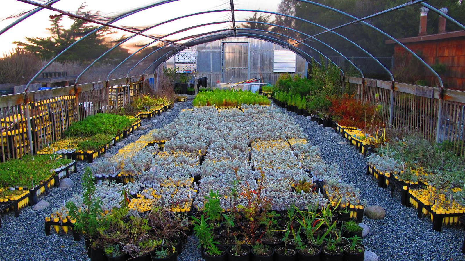 Native plant nursery @Asilomar
