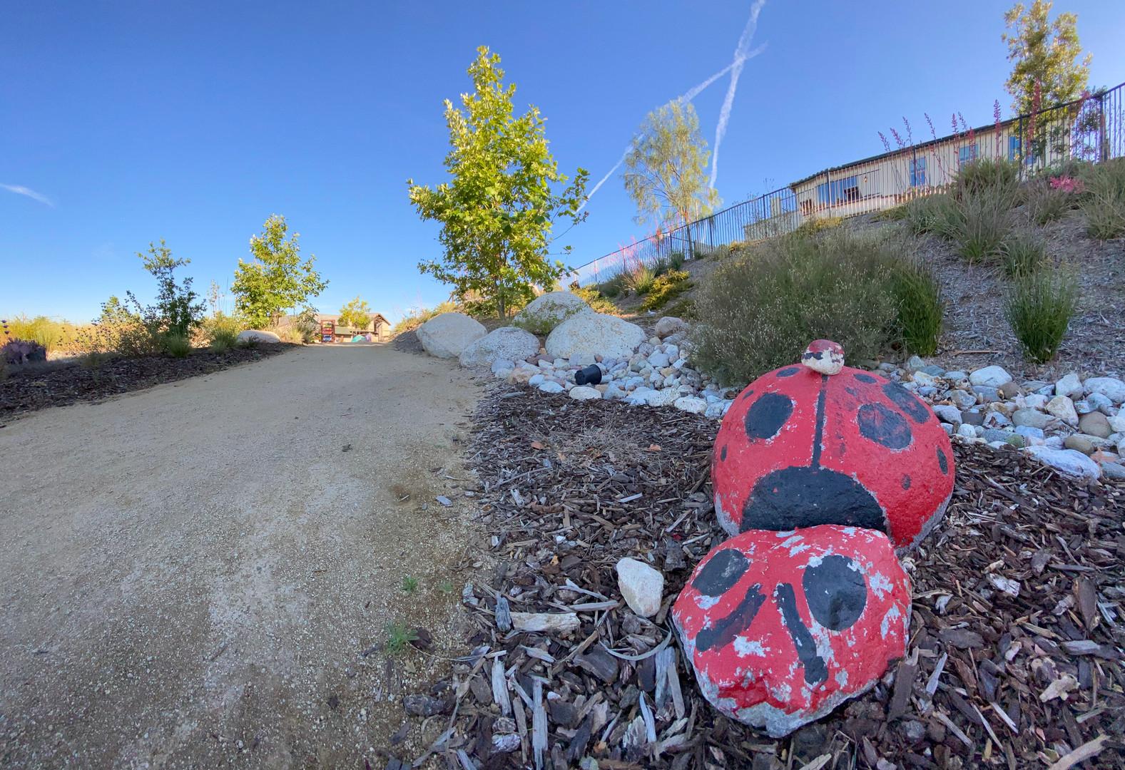 Ladybug boulder path design