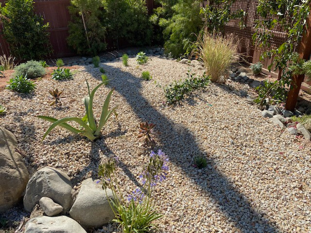 Top Dressing with succulant garden