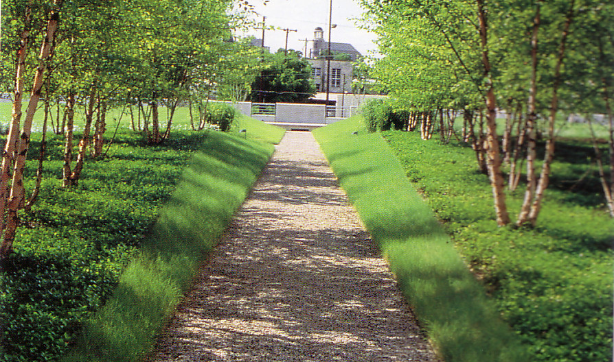 Slope tree path with grass