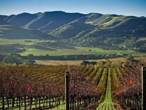 The Santa Barbara wine region