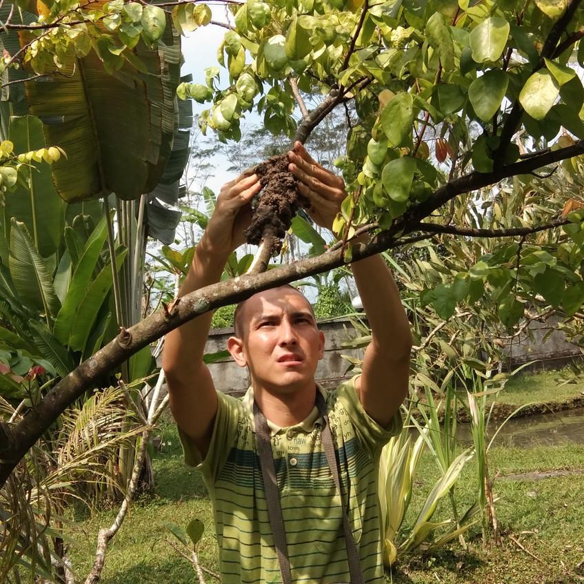 Seb grafting a tree_1