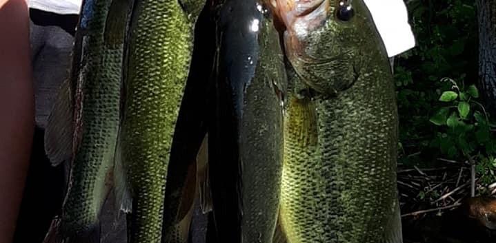 stinger of fish.jpg