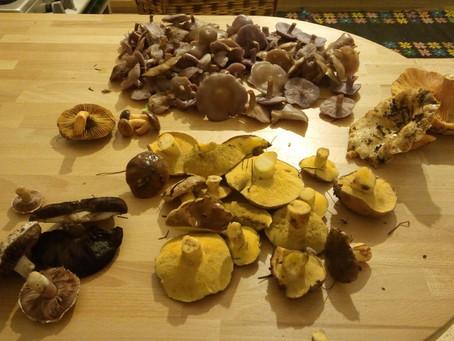 סקירת מינים חלק א' - אורניה אחלמית ונטופה
