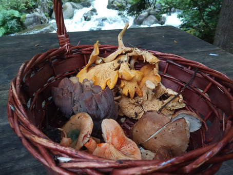 פטריות מאכל בבולגריה