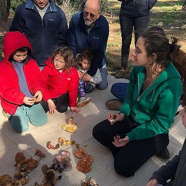 להתאהב בפטריות סיור ליקוט פטריות