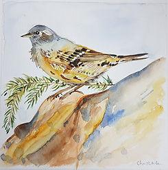Aquarelle Oiseau par Christelle Marande
