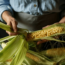 farvesting_maize.png