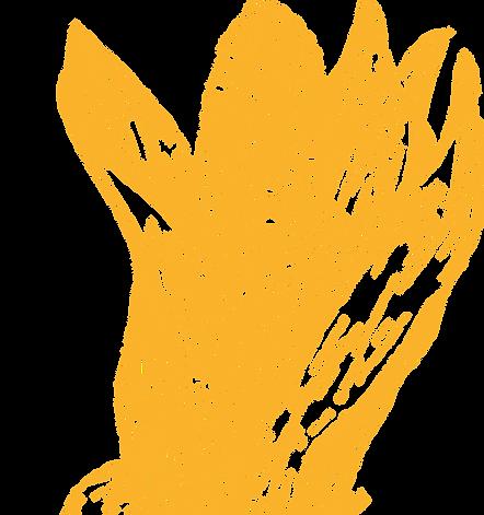 corn_image.png