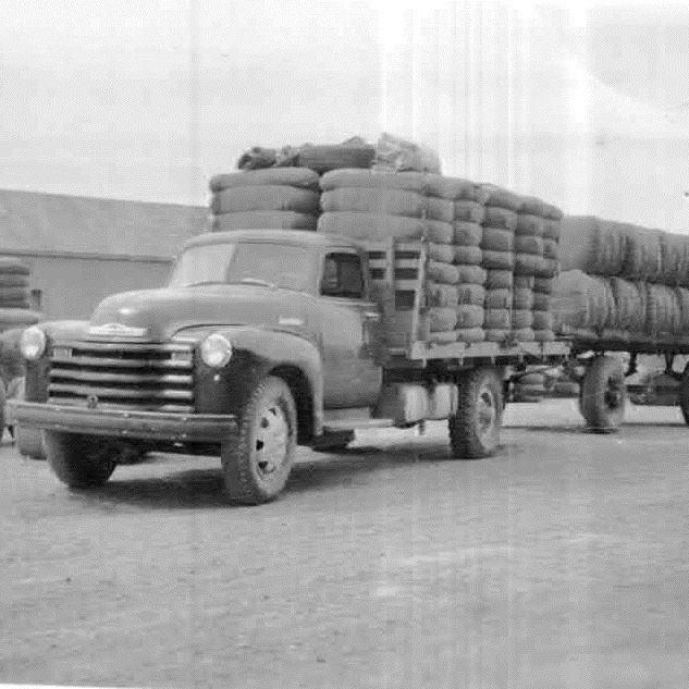Transporte kusanociv Schupbach.jpg