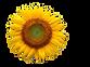 9CC17986-F04A-4FDE-886B-D529C422084A_edi