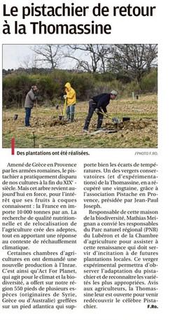 Plantation pistachier Thomassine_Manosque_LA_PROVENCE__18 mars 2021.jpg