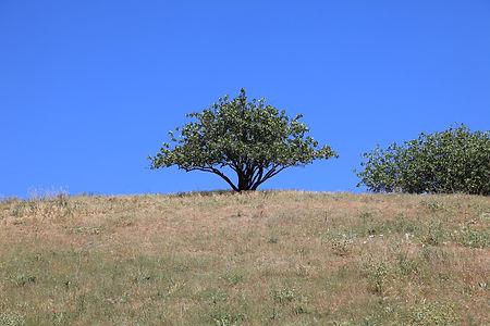 nature-1154055_1920.jpg