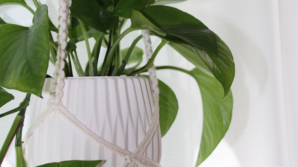 Basic Macramé Plant Hanger