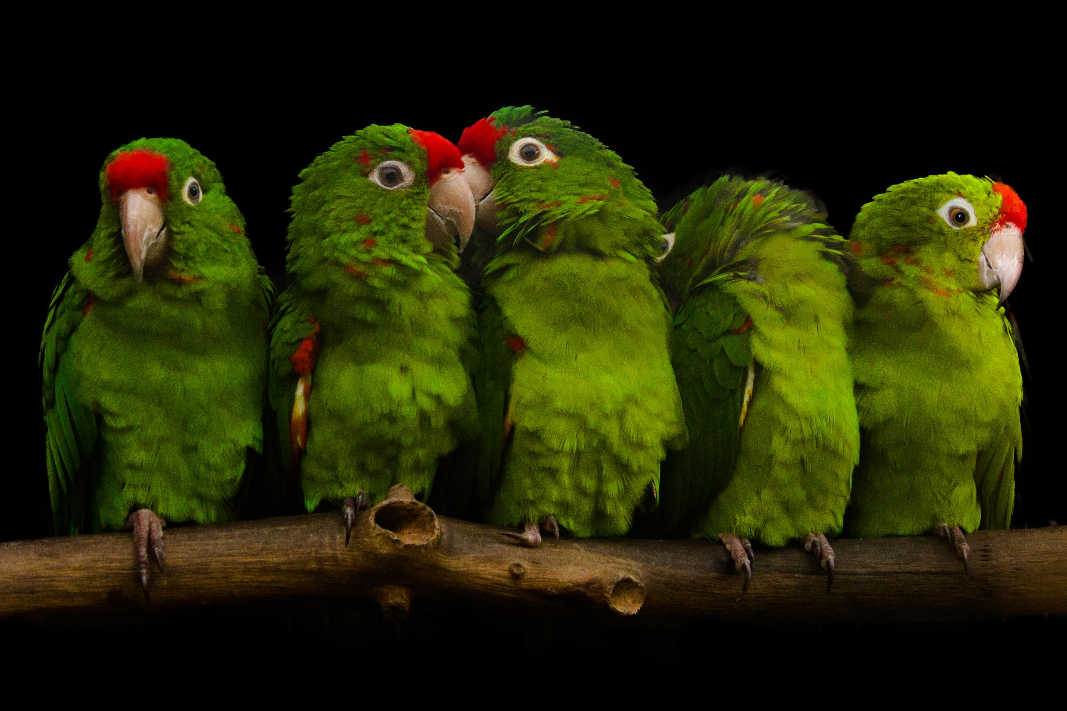 JUST BEAK-CAUSE | Bird Shops | Scottsdale | AZ Exotic Bird
