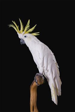 George   AZ Exotic Bird Rescue