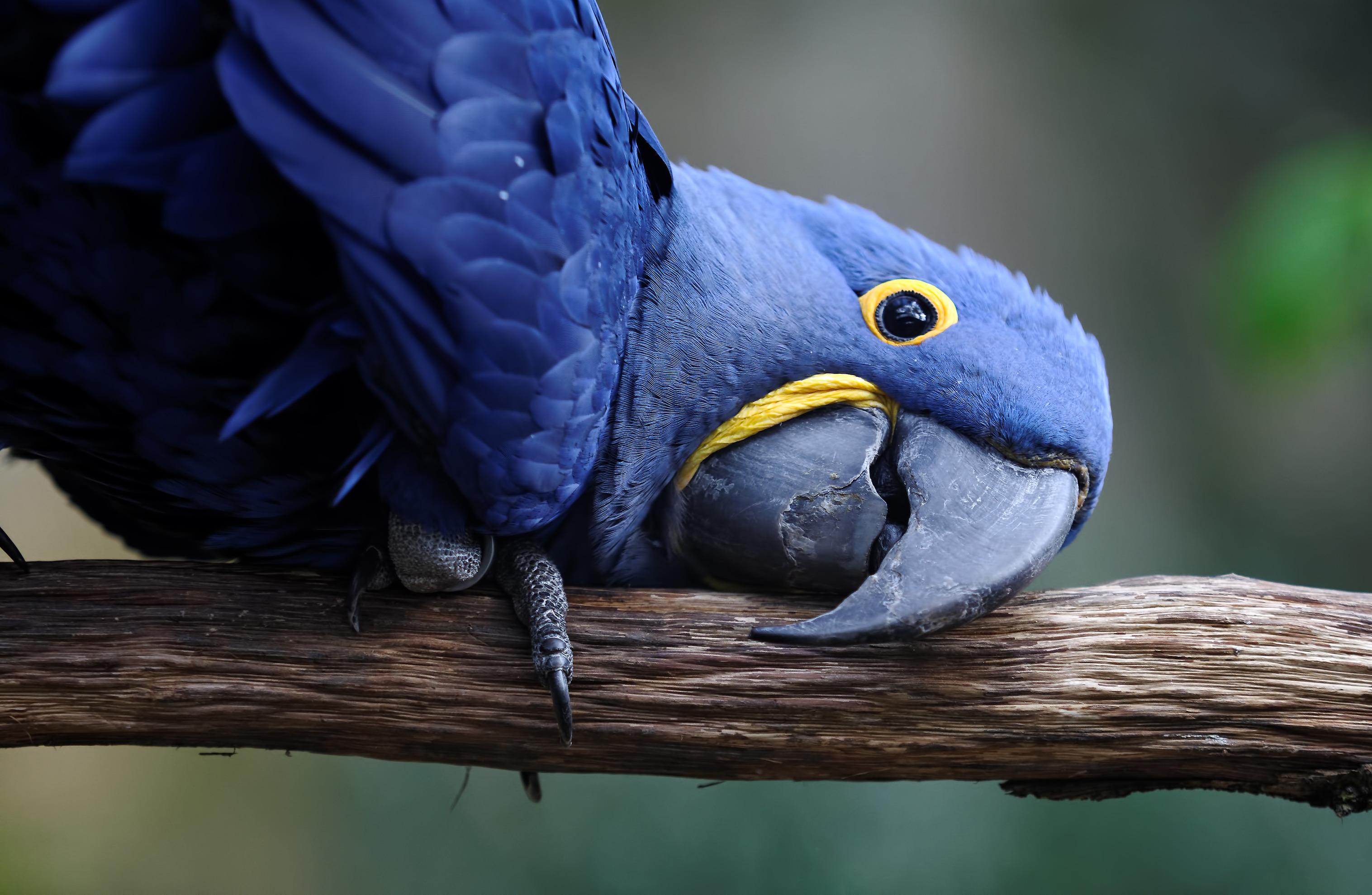 Bird Shops | Scottsdale | AZ Exotic Bird Rescue, Inc