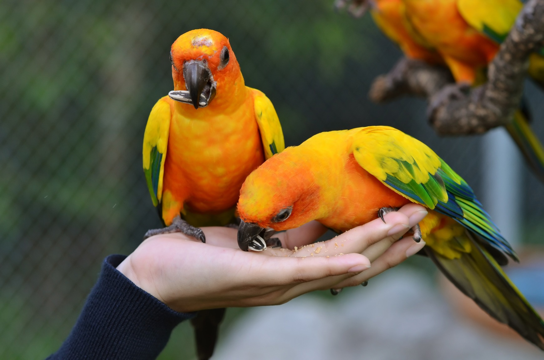 Bird Shops   Scottsdale   AZ Exotic Bird Rescue, Inc