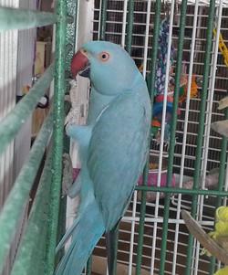 Sonny   AZ Exotic Bird Rescue