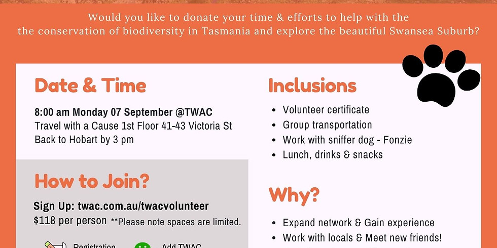 Swansea Volunteer Day