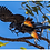 Thumbnail: TOP END BIRD & WILDLIFE PHOTO SAFARI